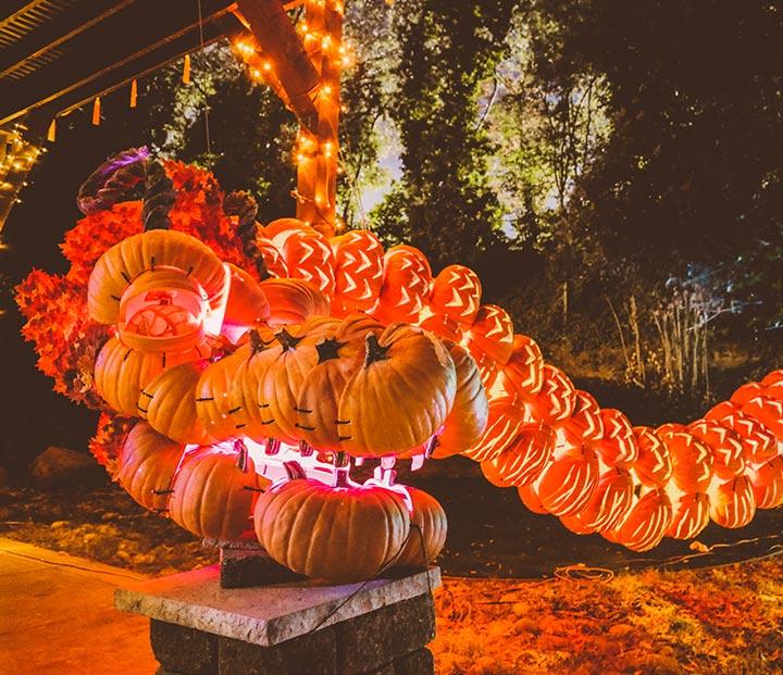 Pumpkin Nights | FAQ's